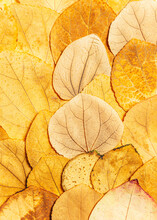 Layers Of Yellow Fall Leaves