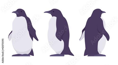 Fotografija Penguin set, cute large aquatic flightless seabird