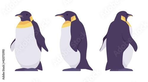 Fotografija Penguin set, cute large aquatic flightless seabird with yellow neck