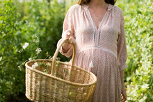 Pregnant Belly With Basket Of Wild Flowers