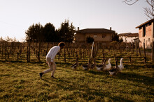 Man Leading Geese Inside The Farm Before The Evening