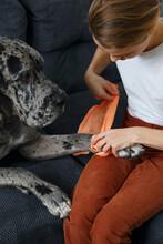 Female Owner Bandaging Paw Of Dog