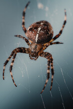 Portrait Of A Spider