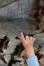 Young Boy Counting Tree Rings.