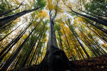 Majestic Tree In Autumn Forest