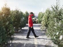 Boy Looking For Christmas Tree Outside At Lot