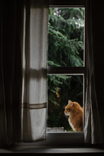 Side View Of Cat Sitting Outdoors On Windowsill