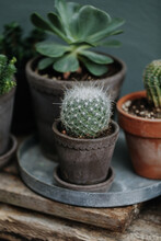 Tiny Collection Of Succulents In Terracotta Pots