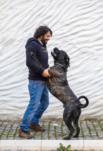 Outdoor Portrait Of A Man And His Pet Friend, Cane Corso Dog