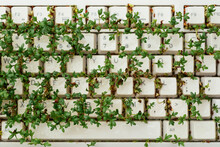 Cress On Keyboard