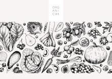 Hand Drawn Vegetables And Fruits. Vector Pupkin, Pear,apple, Artichoke, Plum, Grape, Tomato, Onion, Cheery, Gooseberry Blackberry Engraved Illustration Menu Flyer Package Design.