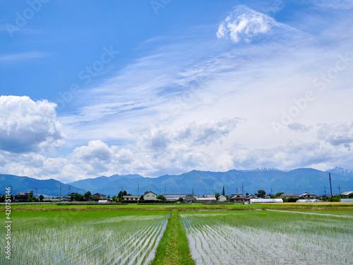 Tela 5月、田植え後の水田・青空と雲の風景 長野県松本市