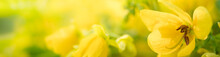 Nature Of Yellow Flower In Garden Using As Background Natural Flora Cover Page Or Banner Design