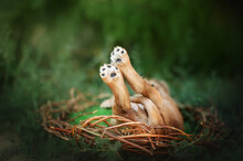 English Cocker Spaniel Little Puppies Cute Photo On Spring Background