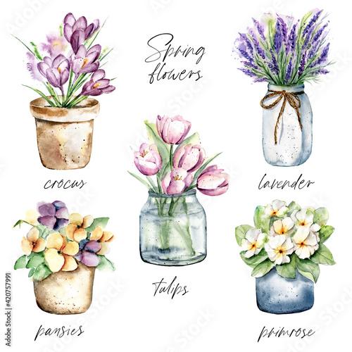 Obraz na plátně Spring flowers in pots, watercolor painting