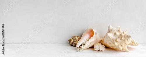 Fototapeta Delicate vintage sea background - seashells on the table. Elegant banner and copy space. obraz