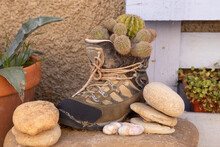 A Funny Still Life, In A Corner Of The Small Town Of Ambel, Formed By An Old Mountain Boot, Turned Into A Pot With Cacti And Plants, In The Campo De Borja Region, Zaragoza, Aragon, Spain.