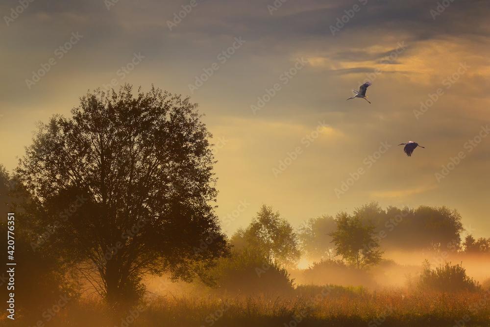 Fototapeta birds in the fog