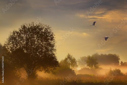 Fototapeta birds in the fog obraz