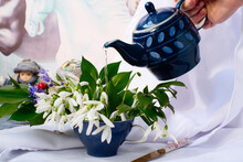 Elegance, Romance And Fragility - First Snowdrops Blossom And Herbal Tea In Blue Vintage Pot