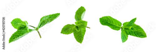 Fototapeta Fresh bright green aromatic mint leaf  isolation obraz