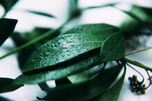 Water Drops On The Green Leaves Of A Tropical Plant, Abstract Floral Fuzzy Background