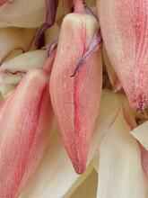 Yucca Plant Flower Close Up