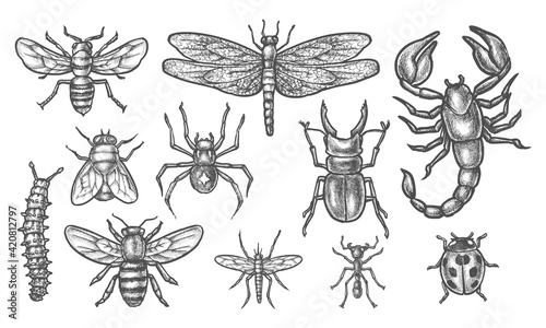 Fényképezés Set of insect sketch. Vintage drawing of bugs