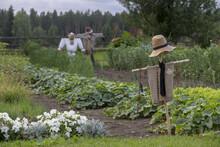 Agricultural Garden With Scarecrows