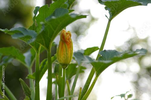 Obraz kwiat, przyroda, rośliny, natura, wieś, uprawa,  - fototapety do salonu