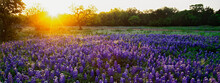 Sunrise In The Hill Country Of Texas.