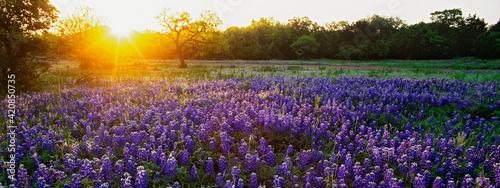Fototapeta Sunrise in the hill country of Texas. obraz
