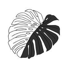 Illustration Of A Gray Leaf Monstera Isolated On A White Background