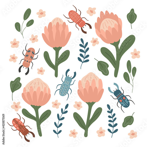 Obraz na plátně Hand drawn protea and stylized stag beetles