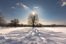Snow Covered Trees And Sun Behind Tree.