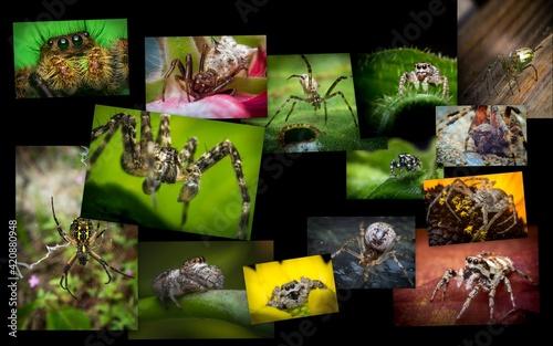 Tela Macro Arachnid Spider Collage