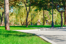A Cyclist Rides A Bicycle In A City Park, Summer Day, Green Lawn With Grass And Trees, Bright Sunlight And Shadows