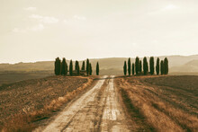 Dirt Road Through Countryside, Tuscany, Italy