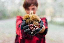 Woman With Handful Of Chestnuts