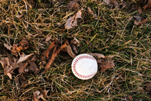 Baseball Ball On Damp Grass With Autumn Leaves, Overhead View