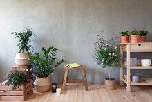 Potted Plants And Flowers, Book On Stool In Indoor Garden