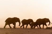 African Elephants (Loxodonta Africana) And Cub, Amboseli National Park, Kenya