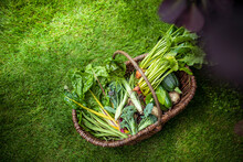 Basket Of Courgettes, Broccoli, Swiss Chard, Golden Beetroot, Runner Beans, New Potatoes And Fennel In Organic Vegetable Garden
