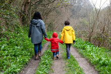 Mother And Sons Walking Together On A Rainy Misty Day In Woodland.