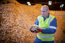 Worker With Dry Wood Chips In Wood Recycling Plant.
