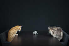Two Alert Domestic Cats Facing Each Other Over A Table With A Toy Mouse In The Middle.