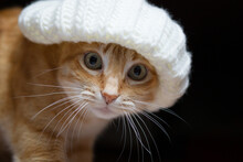 A Pet Ginger Cat With A Beret On Its Head, Staring Out.