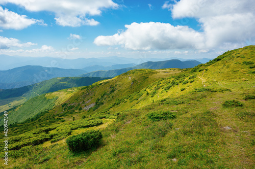 Fototapety, obrazy: hills of the mountain rolling in to the distance. summer landscape of the black ridge in the eastern carpathians, ukraine. sunny scenery with fluffy clouds on the blue sky