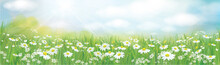 Vector Summer Nature  Background, White Chamomiles Blossoming Field.
