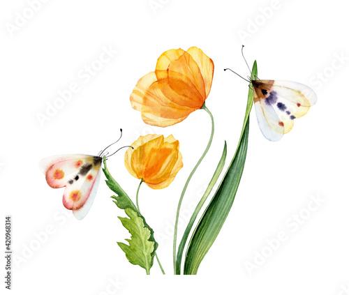 Fotografie, Obraz Watercolor yellow tulips